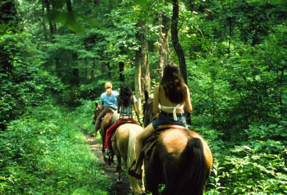 Fethiye Horse Riding hisaronu marmaris kayaköy light tours daily tours,Light Tours Daily Tours, Discount Tours, Package Tours,Fethiye Horse Tour Prices 203