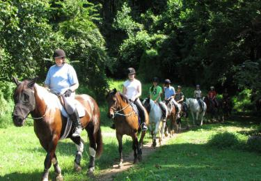 Fethiye Horse Riding hisaronu marmaris kayaköy light tours daily tours,Light Tours Daily Tours, Discount Tours, Package Tours,Fethiye Horse Tour Prices 193